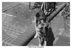 Woof here - Katoomba